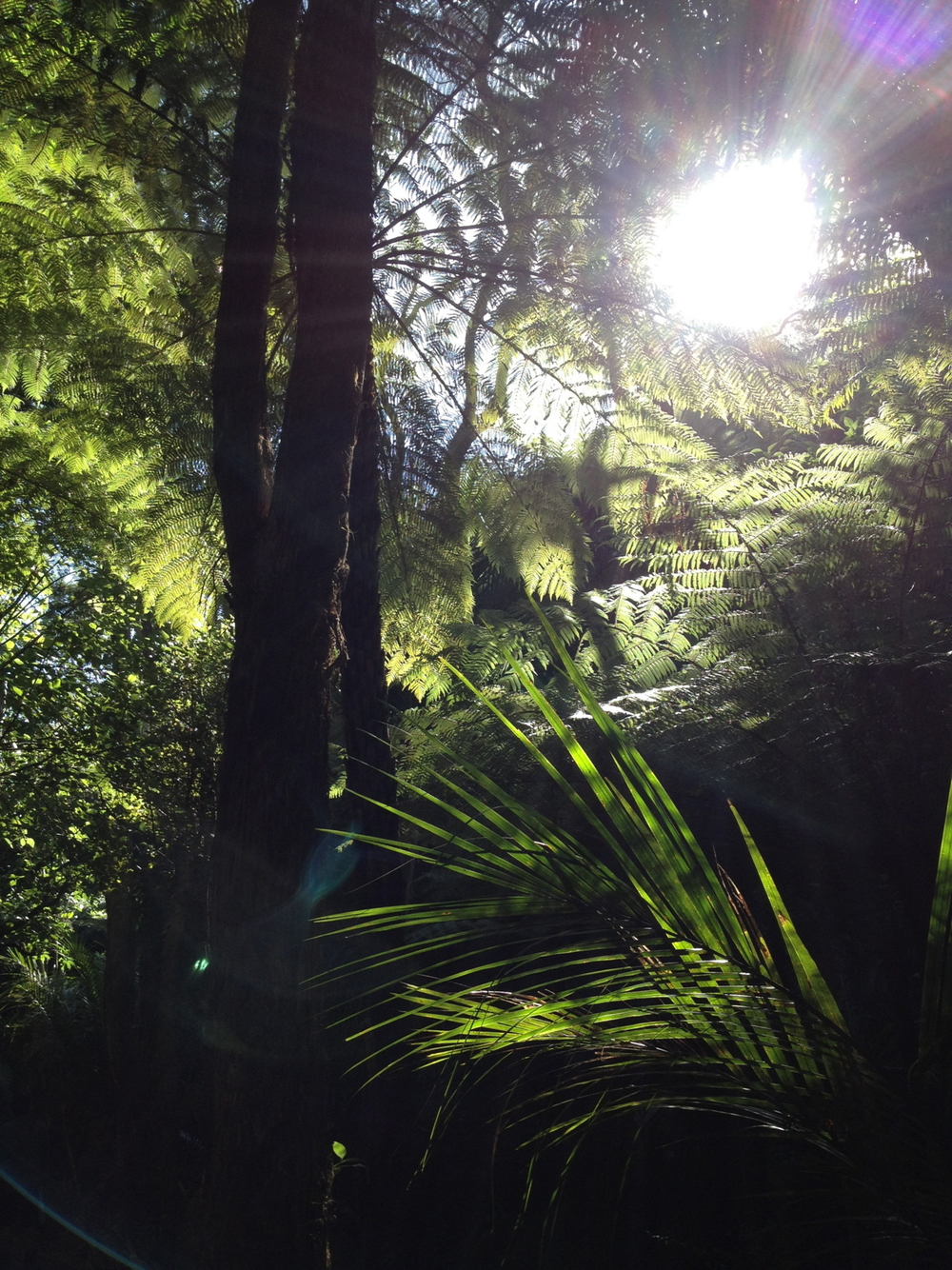Rainforest walk in Piha