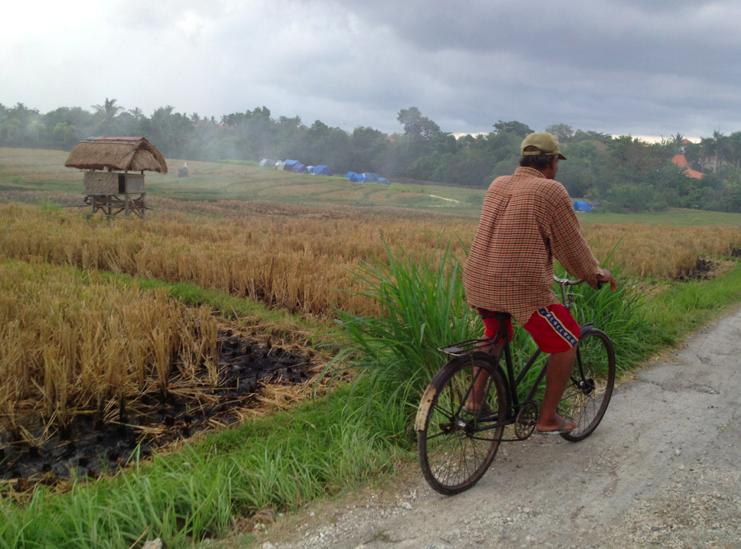Motorbiking through rice paddies