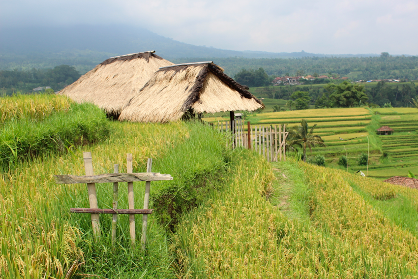 Jatiluwih rice paddies, UNESCO World Heritage site