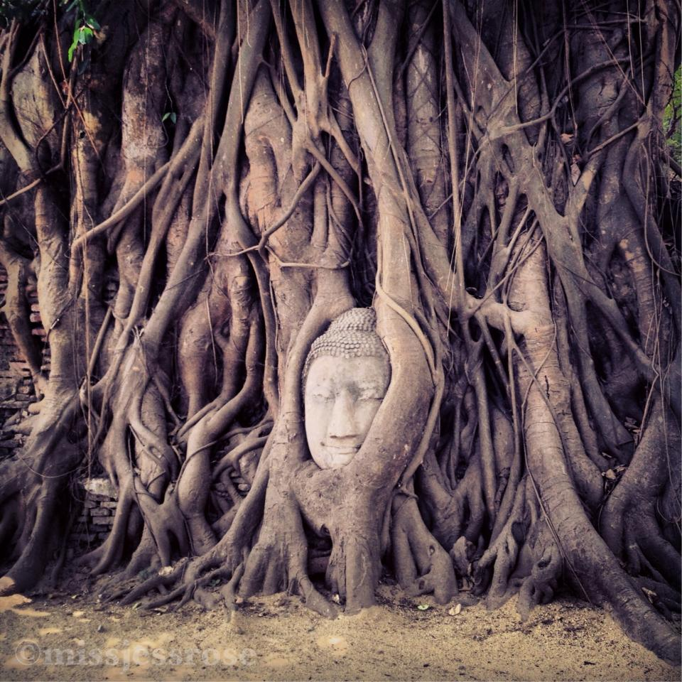 Buddha in a Bohdi tree, Thailand