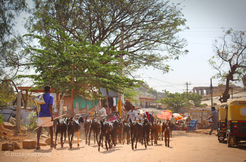 Herding goats through what's left of the Hampi bazaar