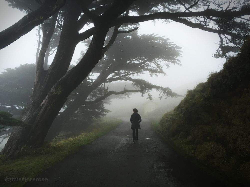 Point Reyes, Northern California.
