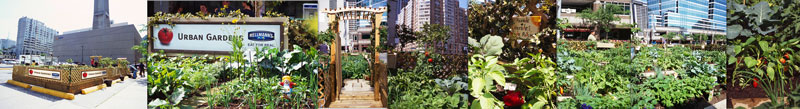 Photos from the Toronto urban garden.