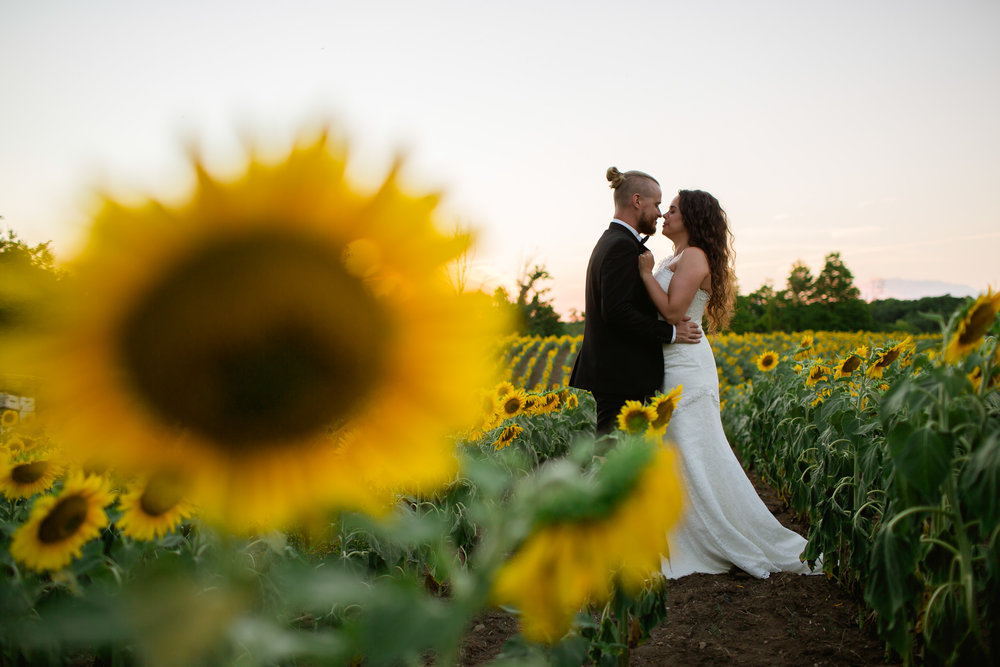 bride and groom sunflowers - sunflower portraits - wedding in toronto