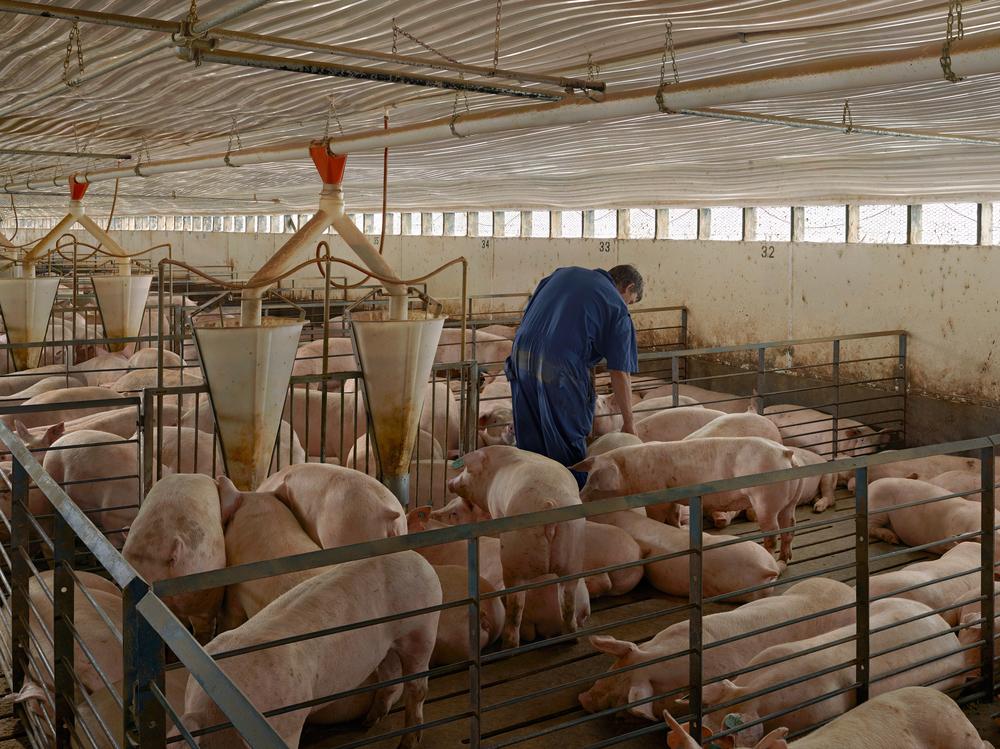 """""""Finishing Barn"""",2013 - 2015  48"""" x 65"""""""