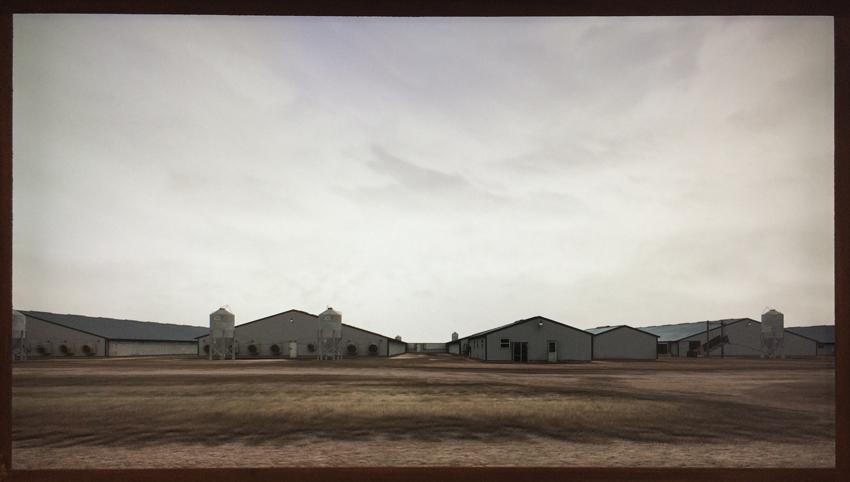 John Gerrard's Sow Farm (Near Libbey, Oklahoma)