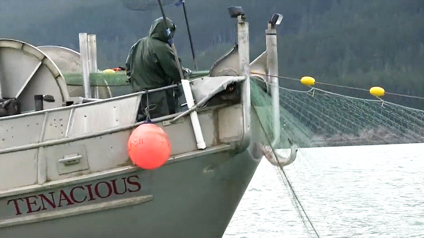 A Look at Alaskan Salmon
