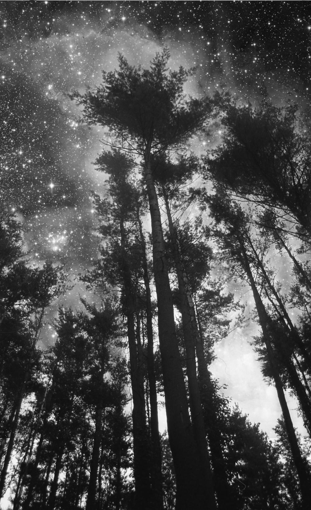 treesinstars.jpg