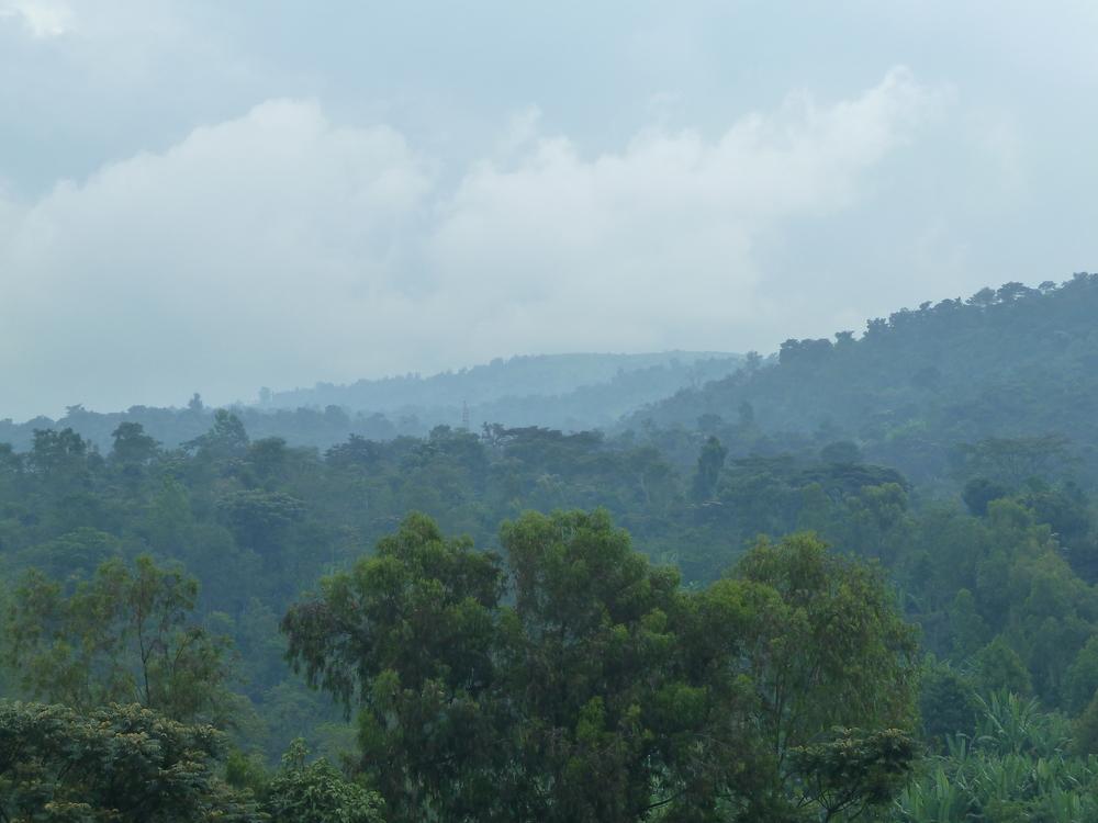 Konga 1.JPG