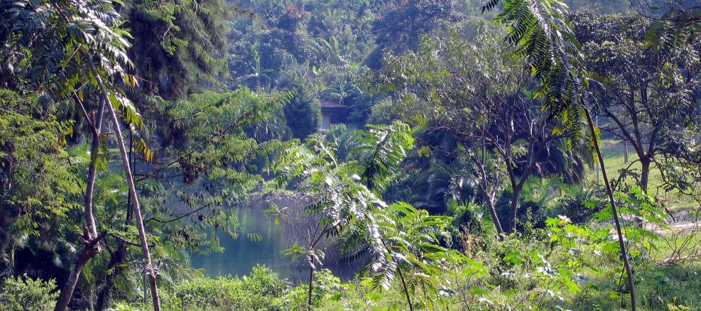 large-1657_rwanda lac kivu view from ocir 5.JPG