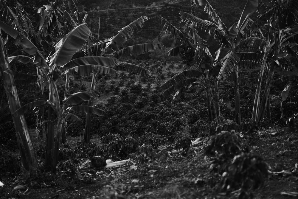 Colombia 2016 63 bw.jpg