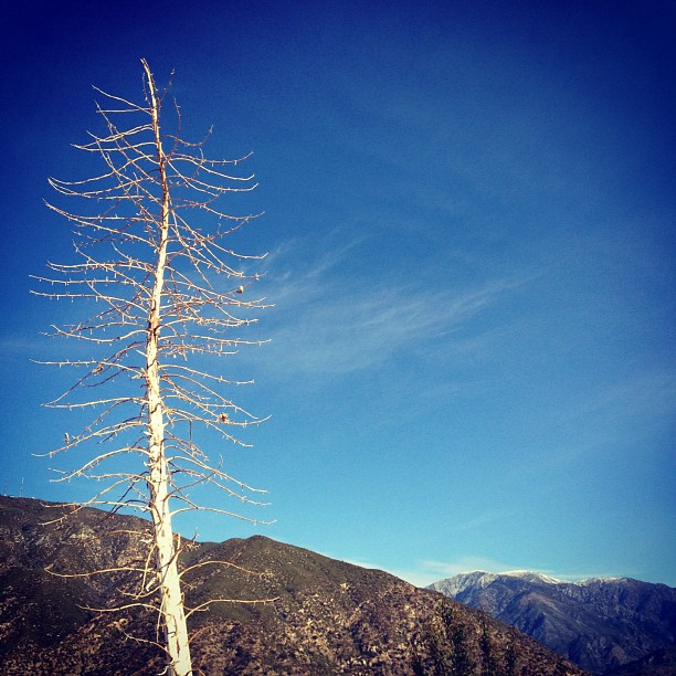 Yucca and Mt Baldy snow (Taken with  instagram )