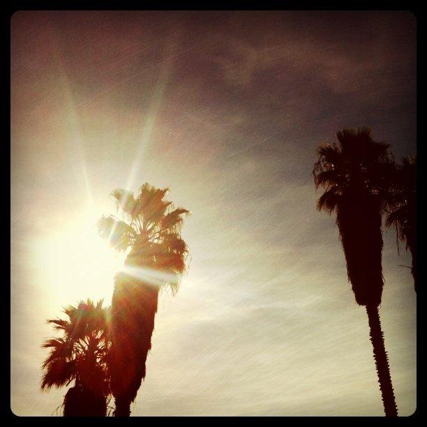Palms (Taken with  instagram )