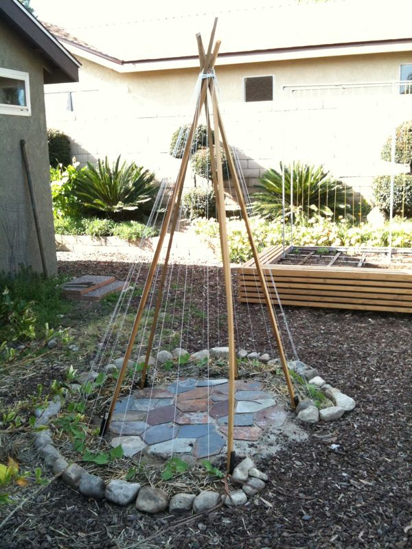 Update on the greenbean teepee.