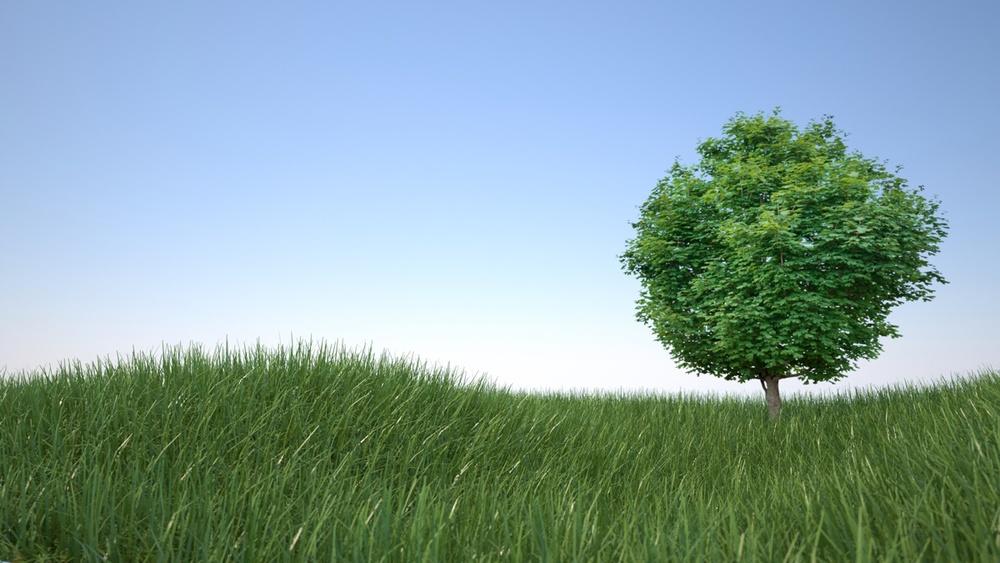 grass hills tree 1200.jpg