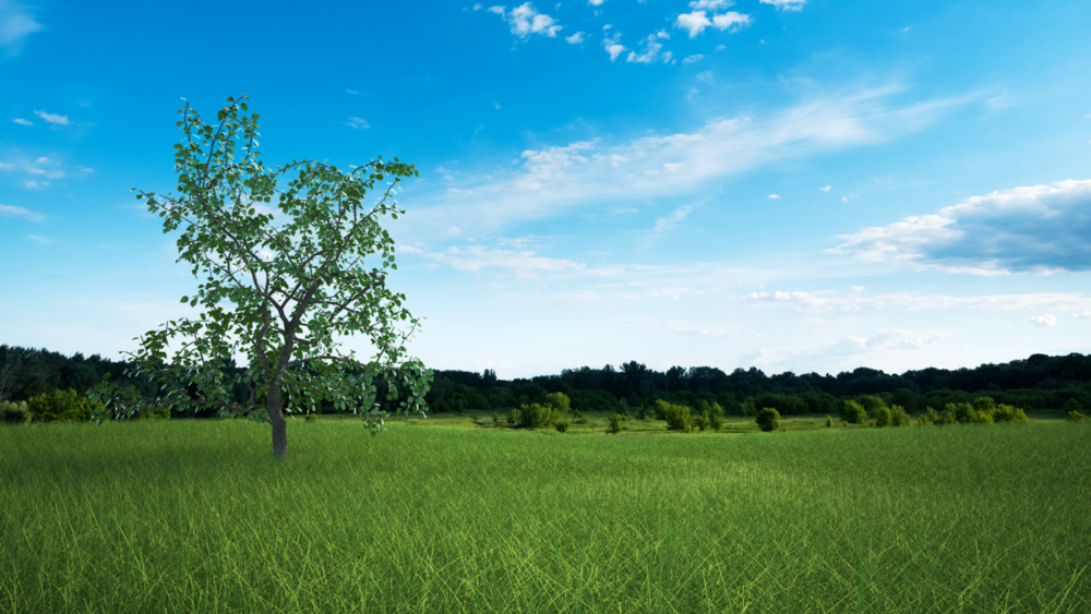 tree w tall grass composite copy_1600.png