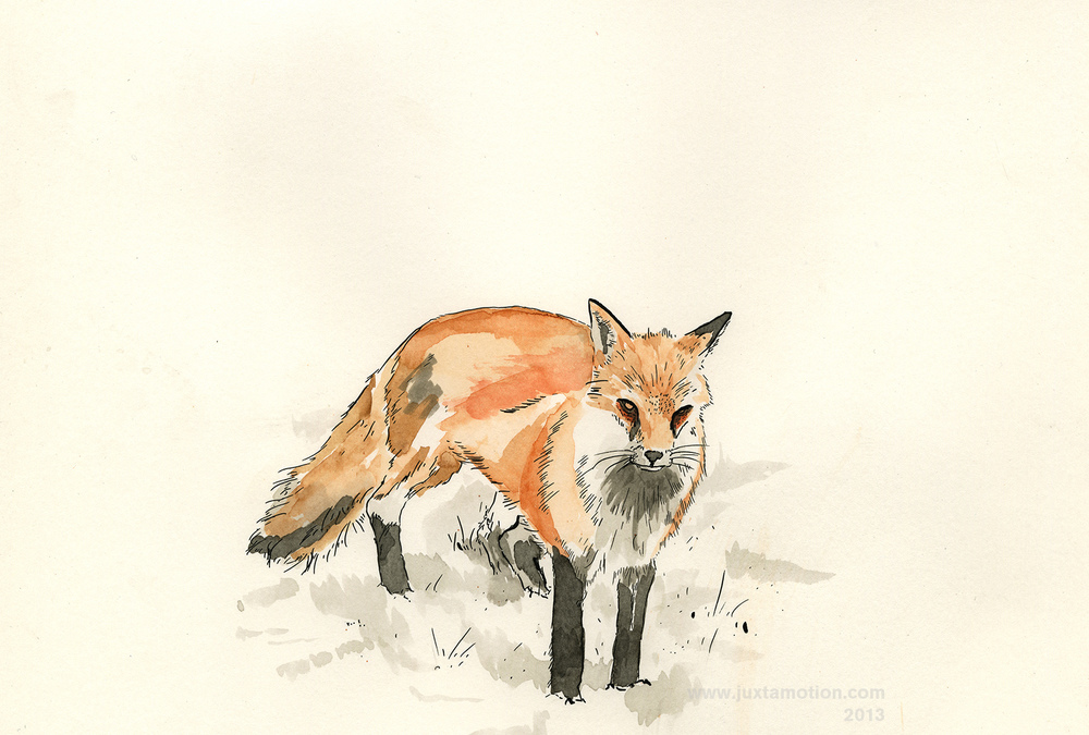 "Red Fox in Snow - 2013  9x12""  Ink and Watercolor"