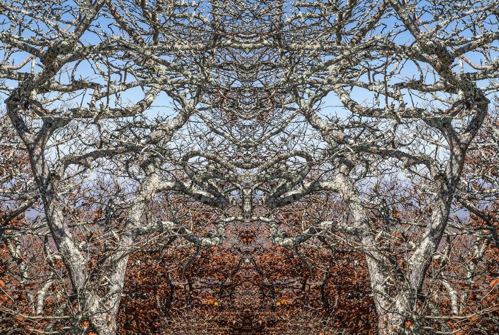 Branch Mosaic