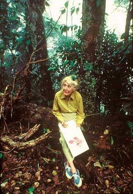 Margaret Forrest Botanical Artist Painting