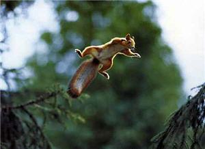 squirrel_leaping.jpg
