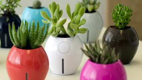 8 Best Self-Watering Planters For The (Black-Thumbed ;-) Design Lover - Thx, @TreeHugger!