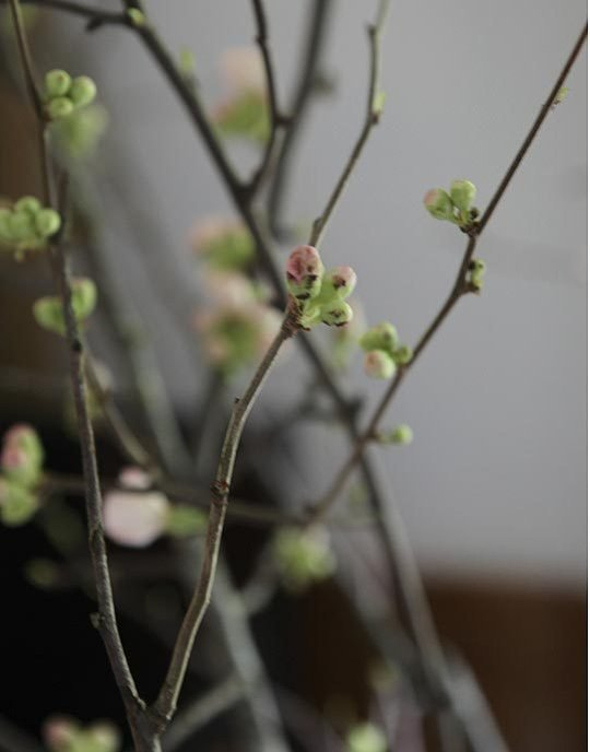 @ Apartment Therapy:   HOW TO USE SPRING'S FLOWERING BRANCHES AS DECOR