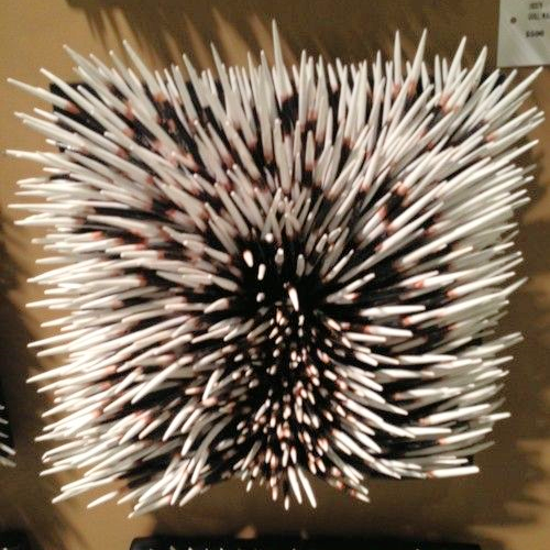 Porcupine quills. At Palacek | Wall art decor design