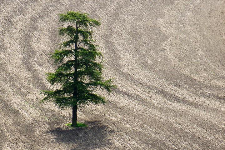 solitary_tree.jpg