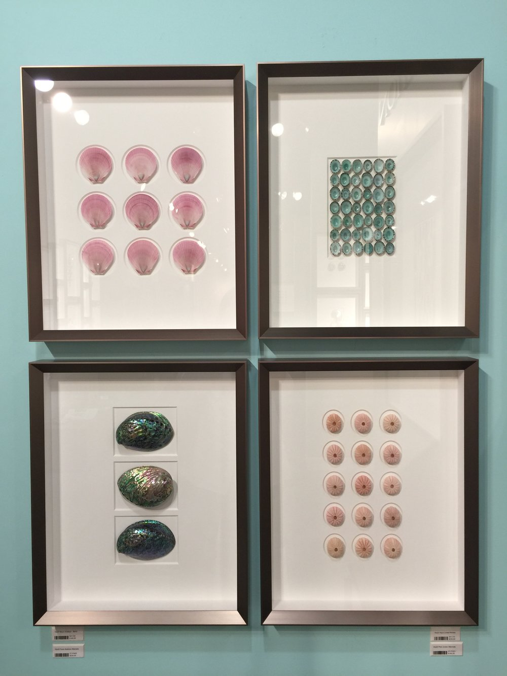 Shells mounted as art by Pheromone