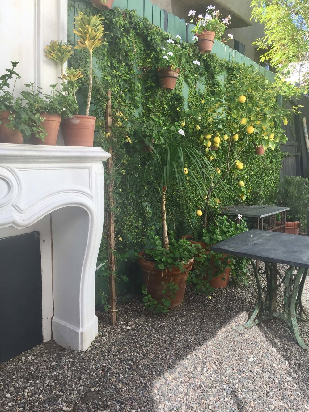 White marble fireplace mantel with lemon trees in pots in the garden at Hollywood At Home, Los Angeles home furnishings shop #lemontree #whitemarblemantel