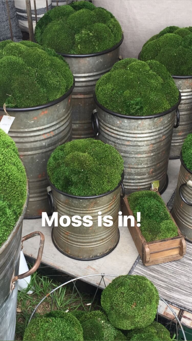 Moss is trending for greenery in containers, planters, and pots for a simple, minimalist look in interiors #moss #planters #roundtop