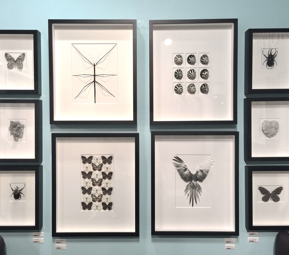 Framed insects and shells by Pheromone #walldecor #wallart #framing #collections