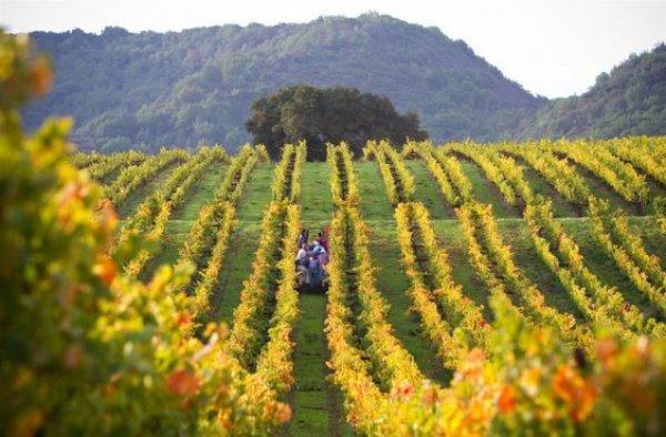 Napa Valley trip Moone Tsai Vineyard