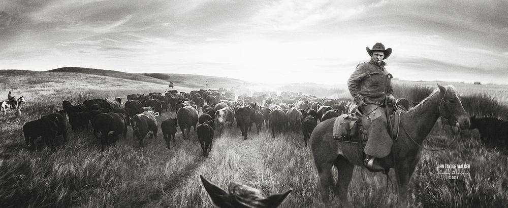John Taylor Walker On Cattle Drive