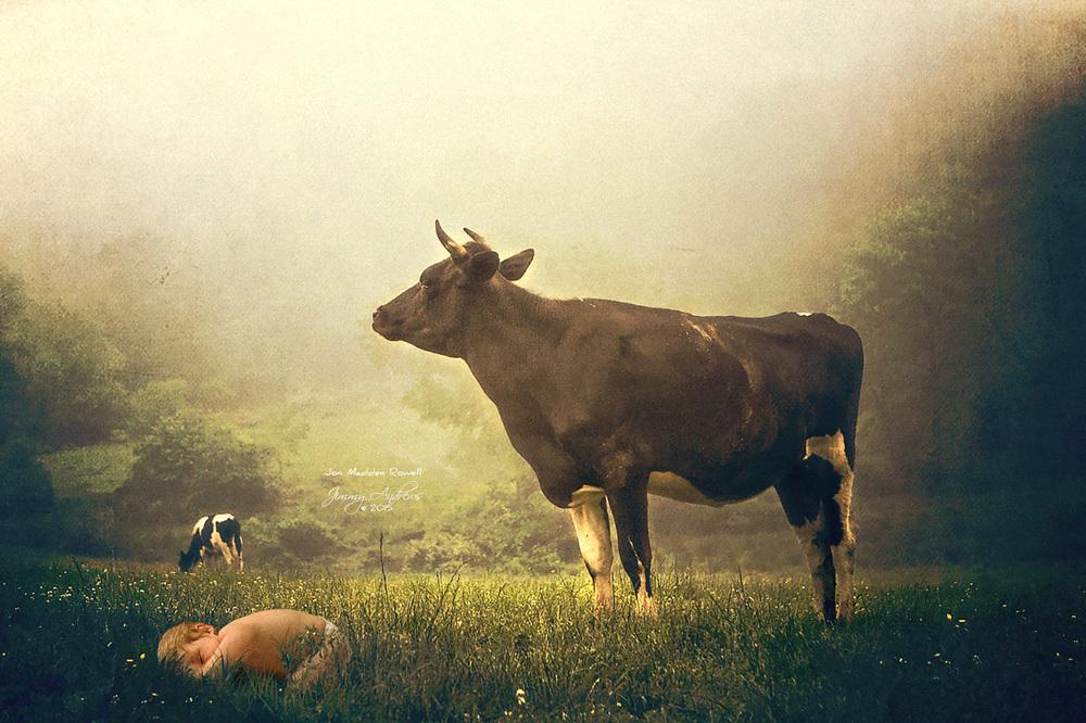 JM Asleep With The Cows.jpg