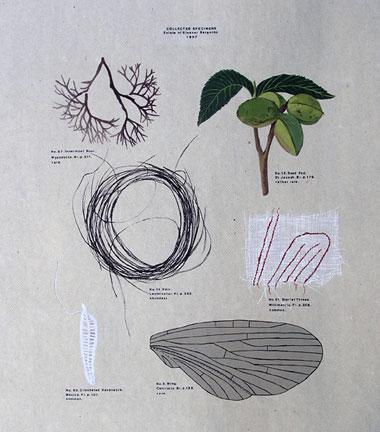 specimens-lo-res.jpg