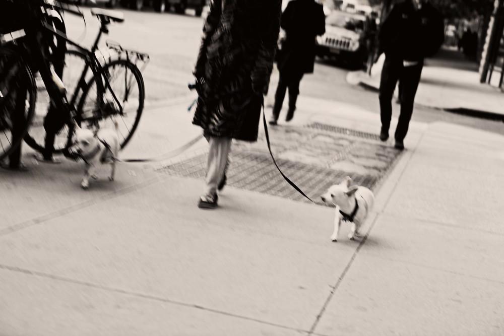 street dogs edit.jpg