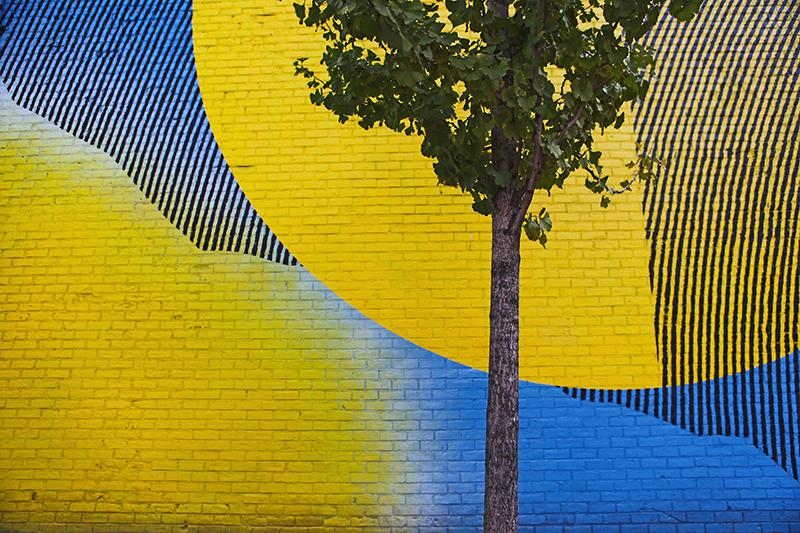 street-tree.jpg