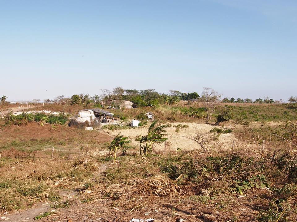 What was once fertile land with abundant crops of rice, plantain and yucca (over 50 tons grown per year) is now razed by bulldozers.