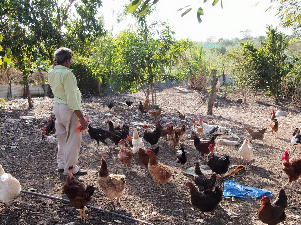 """Where he once could farm enough to feed his family and sell the extra, this """"campesino"""" has a small strip of temporary land suitable only for his chickens."""