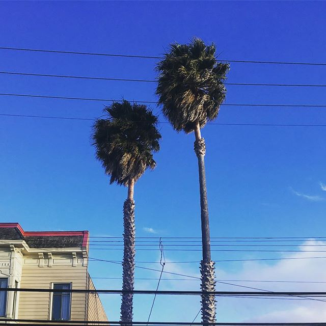 SF Skies and Truffula Trees #muchmuchlatergram