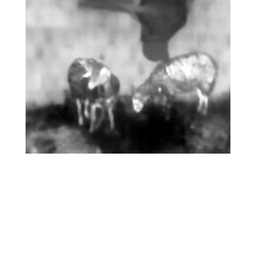 Infrared - 08.jpg