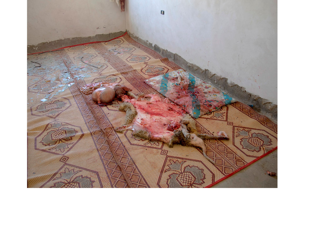 Beit Hannoun, Gaza A slaughtered inside inside a house that abandoned after an Israeli artilery bombardment during the 2014 War.