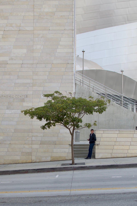 la_disney_tree.jpg