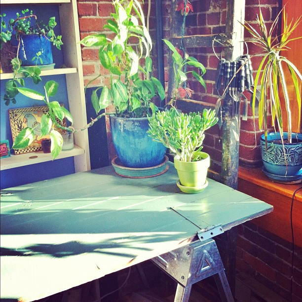 Another farmer's market find... a very old, chippy blue barn door to serve as my new studio table top. The vintage sellers at SOWA market are very kind to artists and I got it for almost nothing.