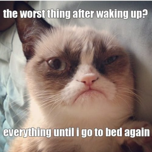 Grumpy-cats-worst-thing-after-waking-up_large.jpg