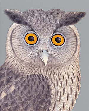 notes and queries owl.jpg