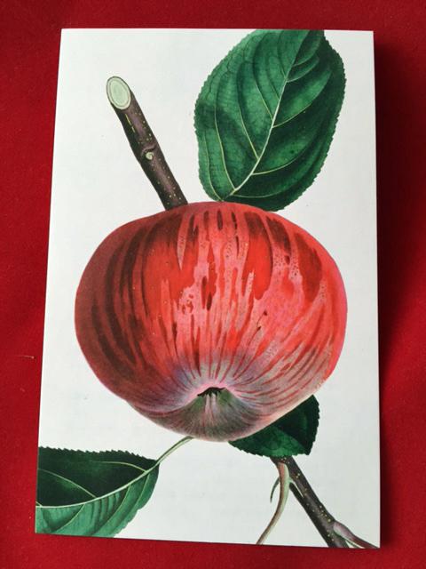 fullsizerenderfruit postcards 3.jpg