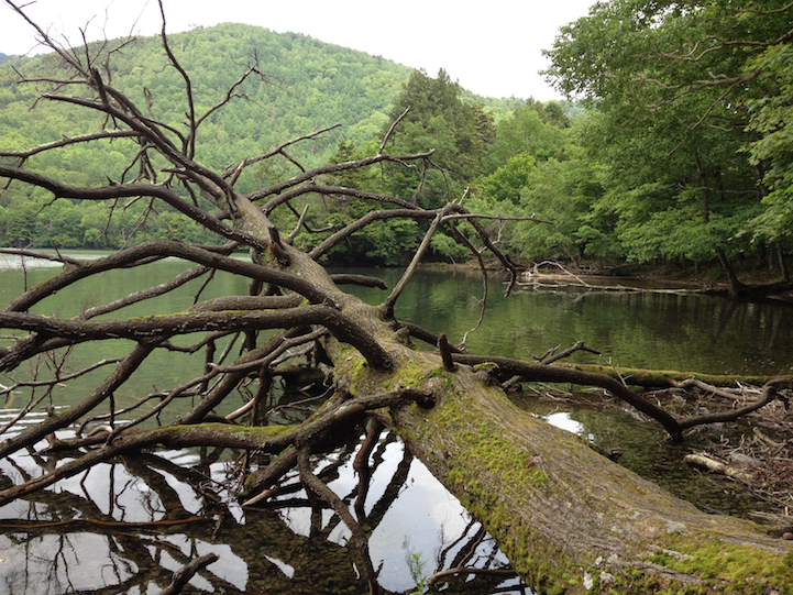 many fallen treees on the hiking path of Lake Yu (yunoko)