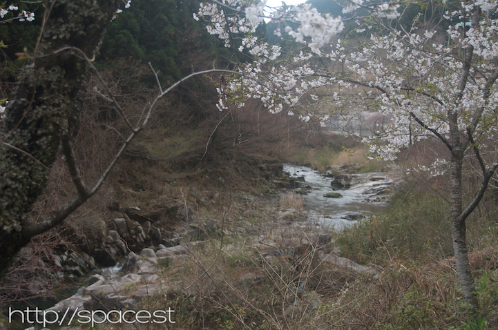 Cherry Blossoms River 1.jpg